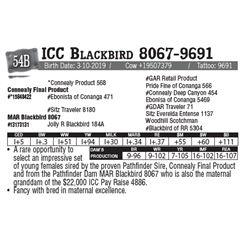 Lot - 54B - ICC Blackbird 8067-9691