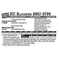 Lot - 54D - ICC Blackbird 8067-9700