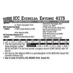 Lot - 55 - ICC Everelda Entense 4175
