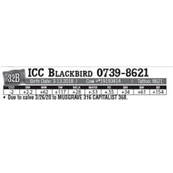Lot - 32B - ICC Blackbird 0739-8621