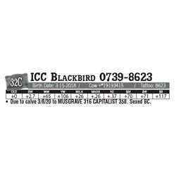 Lot - 32C - ICC Blackbird 0739-8623