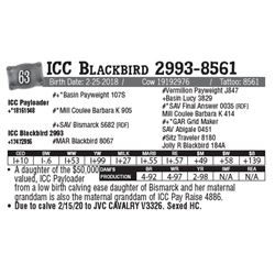 Lot - 63 - ICC Blackbird 2993-8561