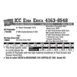 Lot - 66 - ICC Eisa Erica 4163-8548