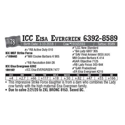 Lot - 78 - ICC Eisa Evergreen 6392-8589
