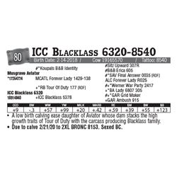Lot - 80 - ICC Blacklass 6320-8540