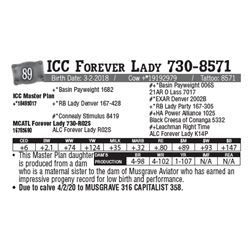 Lot - 89 - ICC Forever Lady 730-8571