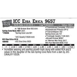 Lot - 112A - ICC Eisa Erica 9657