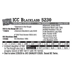 Lot - 114 - ICC Blacklass 5230