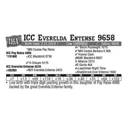 Lot - 116A - ICC Everelda Entense 9658
