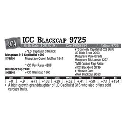 Lot - 97A - ICC Blackcap 9725