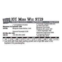 Lot - 101A - ICC Miss Wix 9719