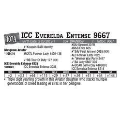 Lot - 107A - ICC Everelda Entense 9667