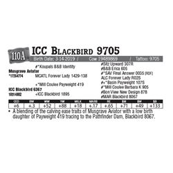 Lot - 110A - ICC Blackbird 9705