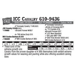Lot - 196B - ICC Cavalry 610-9436