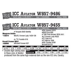 Lot - 212A - ICC Aviator W857-9486