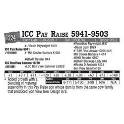 Lot - 224 - ICC Pay Raise 5941-9503