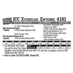 Lot - 178 - ICC Everelda Entense 4181