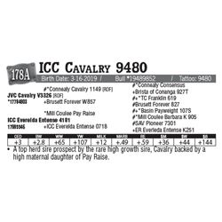 Lot - 178A - ICC Cavalry 9480