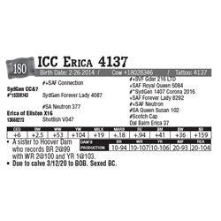 Lot - 180 - ICC Erica 4137