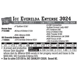 Lot - 186 - Icc Everelda Entense 3024
