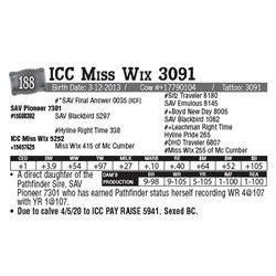 Lot - 188 - ICC Miss Wix 3091