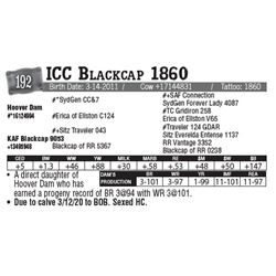 Lot - 192 - ICC Blackcap 1860