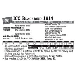 Lot - 194 - ICC Blackbird 1814