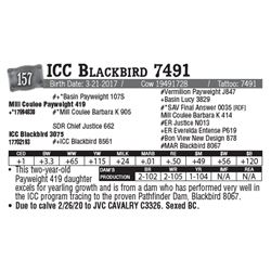 Lot - 157 - ICC Blackbird 7491