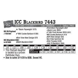 Lot - 162 - ICC Blackbird 7443
