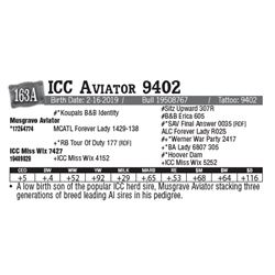 Lot - 163A - ICC Aviator 9402