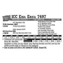 Lot - 167 - ICC Eisa Erica 7497