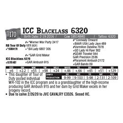 Lot - 170 - ICC Blacklass 6320