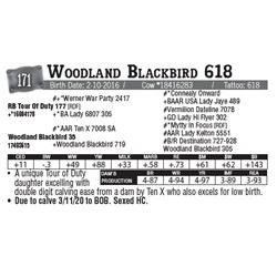 Lot - 171 - Woodland Blackbird 618