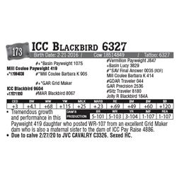 Lot - 173 - ICC Blackbird 6327