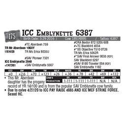 Lot - 175 - ICC Emblynette 6387