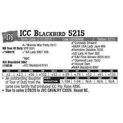 Lot - 176 - ICC Blackbird 5215