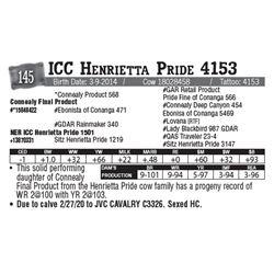 Lot - 145 - ICC Henrietta Pride 4153