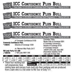 Lot - 232D - ICC Confidence Plus Bull