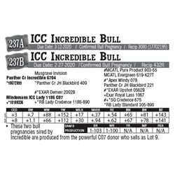 Lot - 237A - ICC Incredible Bull