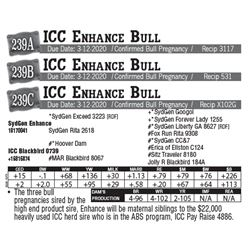 Lot - 239B - ICC Enhance Bull
