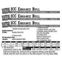 Lot - 239C - ICC Enhance Bull