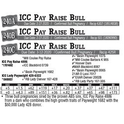 Lot - 240C - ICC Pay Raise Bull
