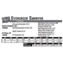 Lot - 411 - Evergreen Embryos