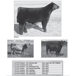Lot - 318 - ICC Club Calf Embryos