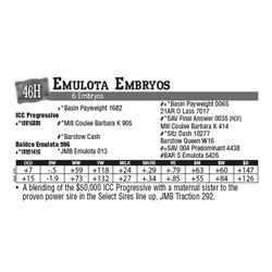 Lot - 46H - Emulota Embryos