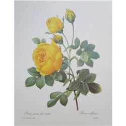 After Pierre-Jospeh Redoute, Floral Print, #128 Rose jaune de soufre (Rose)