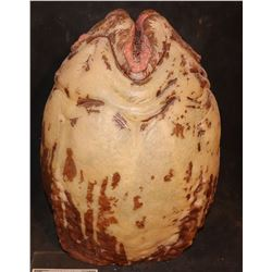 ALIEN VS PREDATOR EGG THAT GLOWED