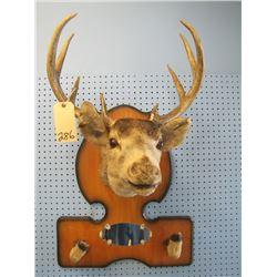 mounted deer head rack