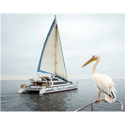 Catamaran Charters Dolphin Cruise for 2 people.