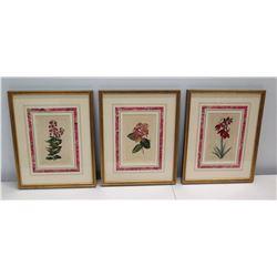 "Qty 3 Framed & Matted Botanical Art 11"" x 14"""